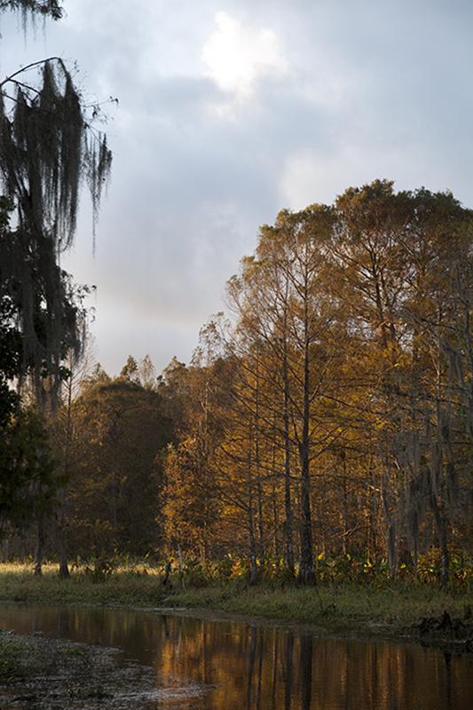 Mike Kelso Landscape